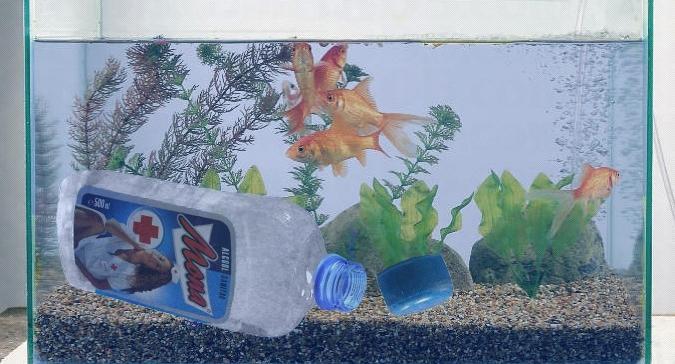 La Vaslui, nici peștii nu au apă în acvariu!