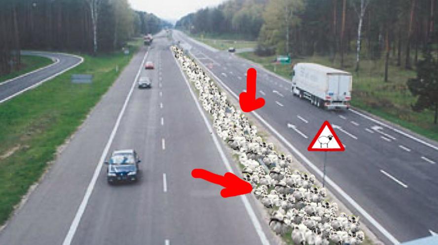 România va avea autostrăzi dotate cu bandă pentru oi!