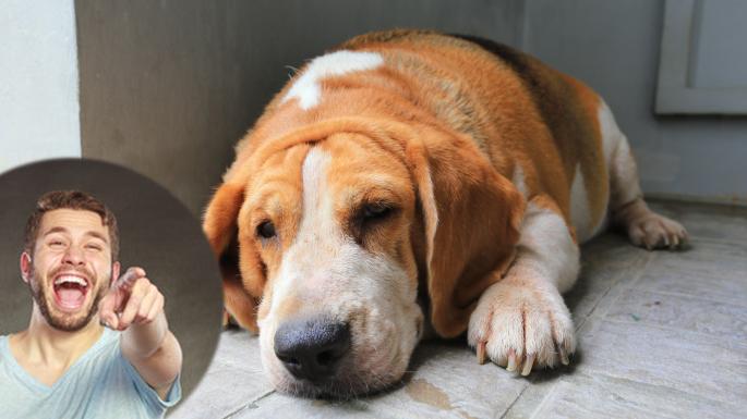 Și-a botezat câinele ROALERT ca să-l facă de căcat că nu presimte cutremurele și dă alerte false!