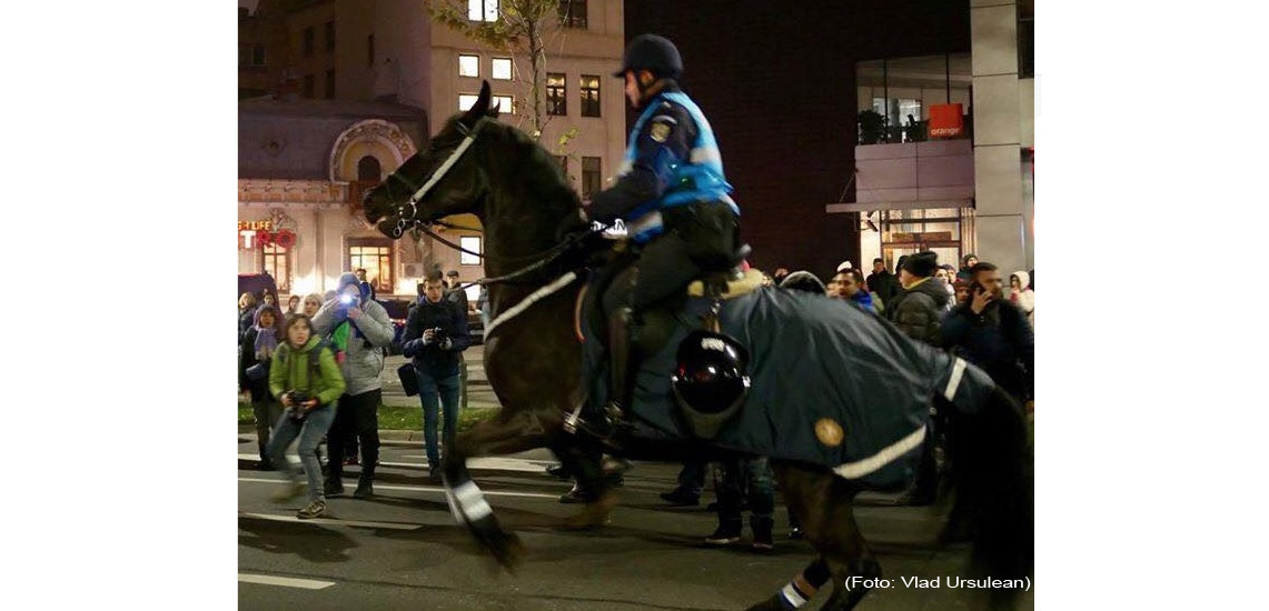 Carmen Dan pune în pericol viața protestatarilor și a cailor ca să-l pupe-n c_r pe Dragnea!