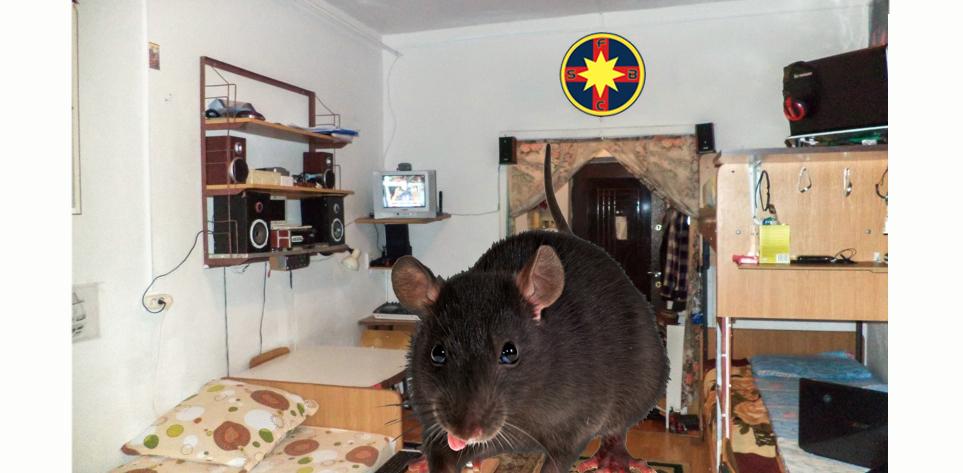 Un șobolan din Regie a dat șpagă ca să nu-i fie aduși teleormăneni în cameră, că ăștia nu au nimic de mâncare!