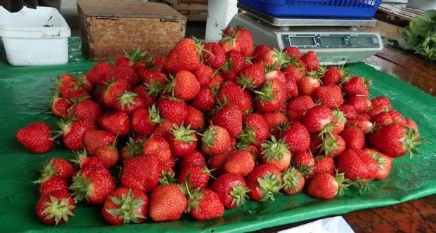 Au apărut primele căpșuni românești: 40 de lei kilogramul!Rămân pe caviar și păstrez banii pentru cireșe