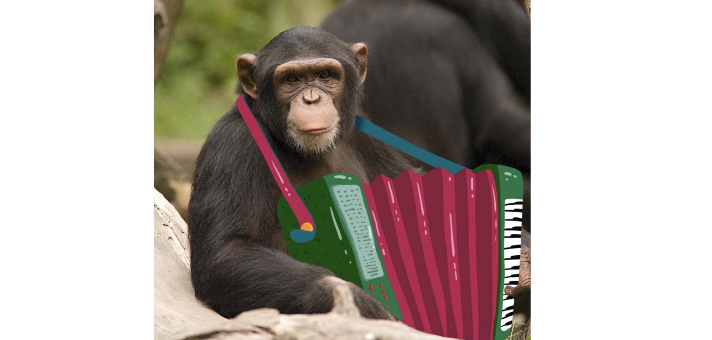 Guță, în pericol să-și piardă pâinea:Un cimpanzeu de la zoo a compus o manea!
