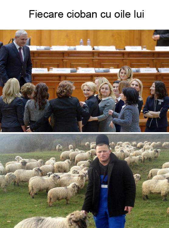 Fiecare cioban cu oile lui