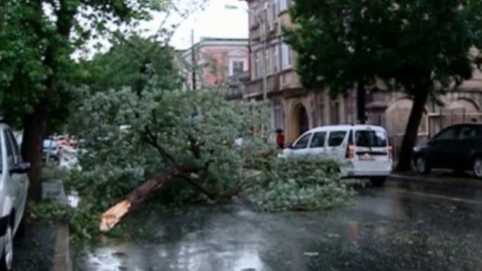 UDMR a revendicat cei 24 de copaci doborâți de furtuna din București!