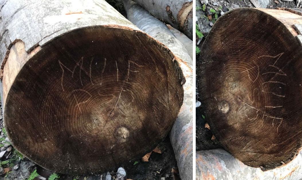 """Miracol la Prislop: În loc de Arsenie Boca, în trunchiul unui copac a apărut """"MUIEPSD""""!"""