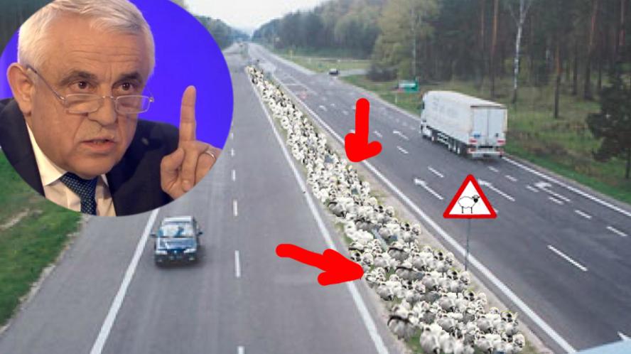 """Petre Daea: """"Vom construi autostrăzi cu bandă specială pentru oi!"""""""