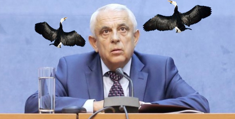 """Spitalul Obregia confirmă: """"Diliul cu cormorani la cape scăpat de la noi!"""""""