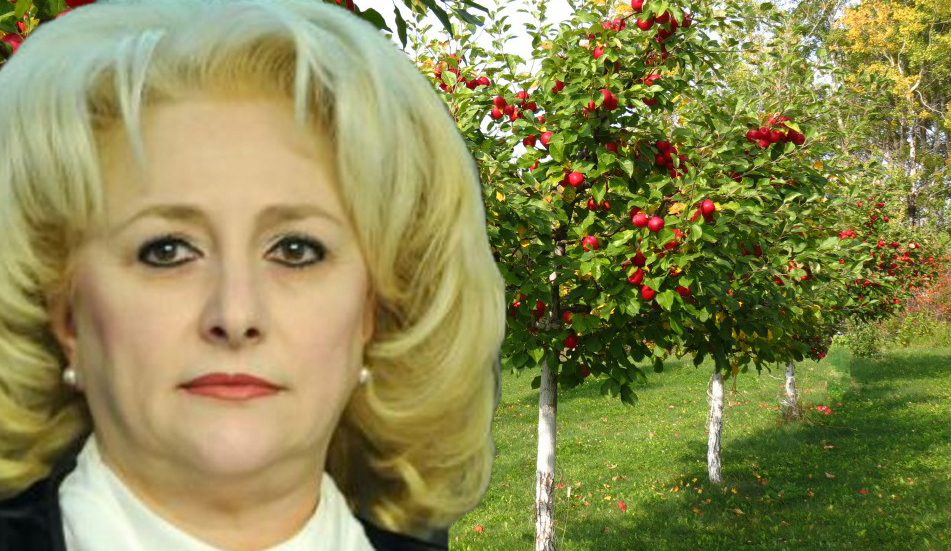 Viorica Dăncilă va organiza Summitul Celor Trei Meri! (pentru compot și dulceață!!)