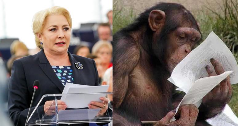 O maimuță a revendicat ultimul discurs al Vioricăi Dăncilă!