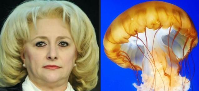"""Din cauza cocainei, meduzele au început să facă """"He-he!"""", ca Veorica!"""