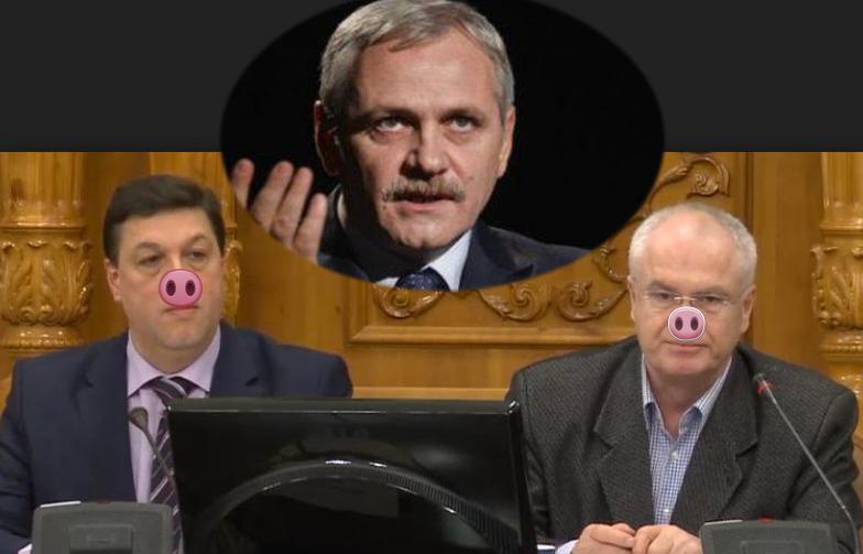 Alertă! Dragnea mai are o fermă de porci și în Parlamentul României!