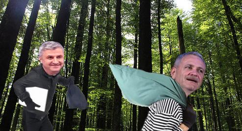 S-a aflat cine comite jafurile de la Sinești: în pădure are loc Tabăra de vară a PSD!