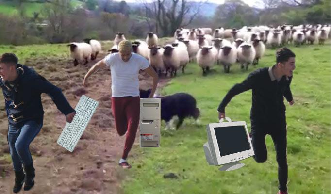 Hackerii ruși care au atacat cibernetic toată planeta, anihilați de un comando de oi din România!