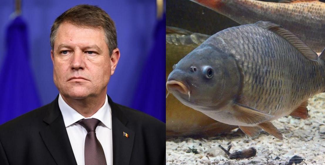 Iohannis a umilit un pește la un concurs de tăcut: peștele a vorbit primul!