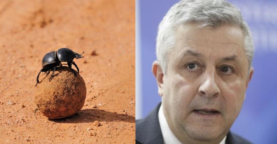Singura diferență dintre gândacul de bălegar și Ciordache e că gândacul de bălegar se mai oprește din mâncat kkt