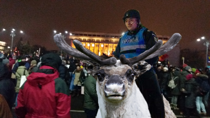 """Firea: """"Pe perioada Târgului de Crăciun din Piața Victoriei, jandarmeria va folosi reni în loc de cai!"""""""