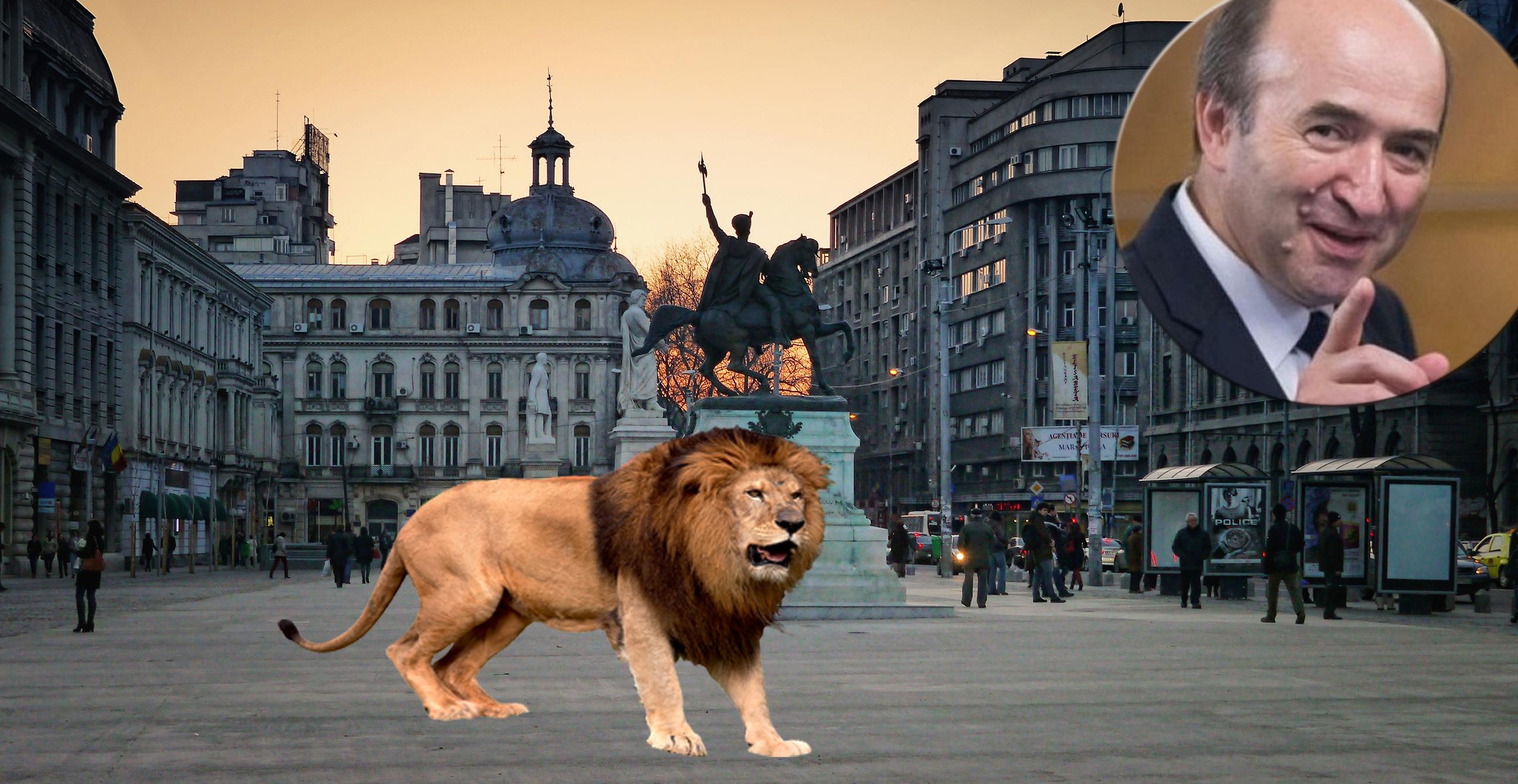 Teroare în București: Tudorel a eliberat șileul de la Zoo!