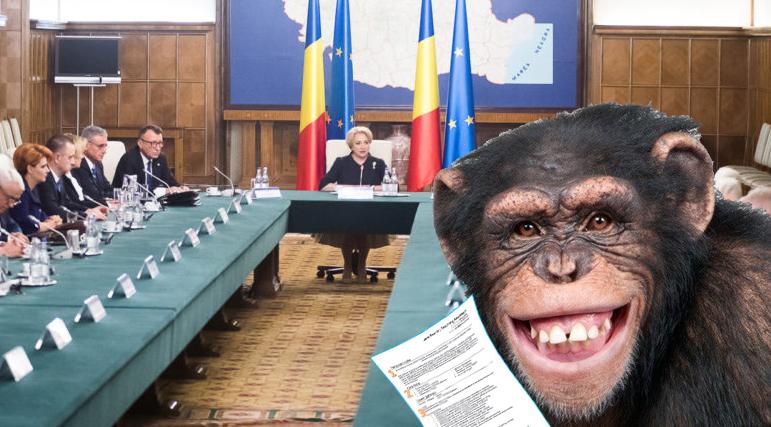 O maimuță a pătruns în sediul Guvernului și și-a depus CV-ul pentru un post de ministru, poate chiar premier!