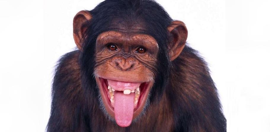 O maimuță de la Zoo Videle a început să se creadă membru în Guvernul României!