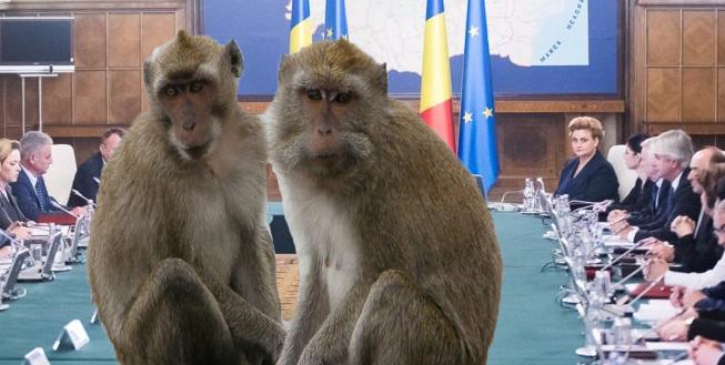 Maimuțele lui Nuțu Cămătaru vorconduce Guvernul cât va fiVeorica plecatăîn America!