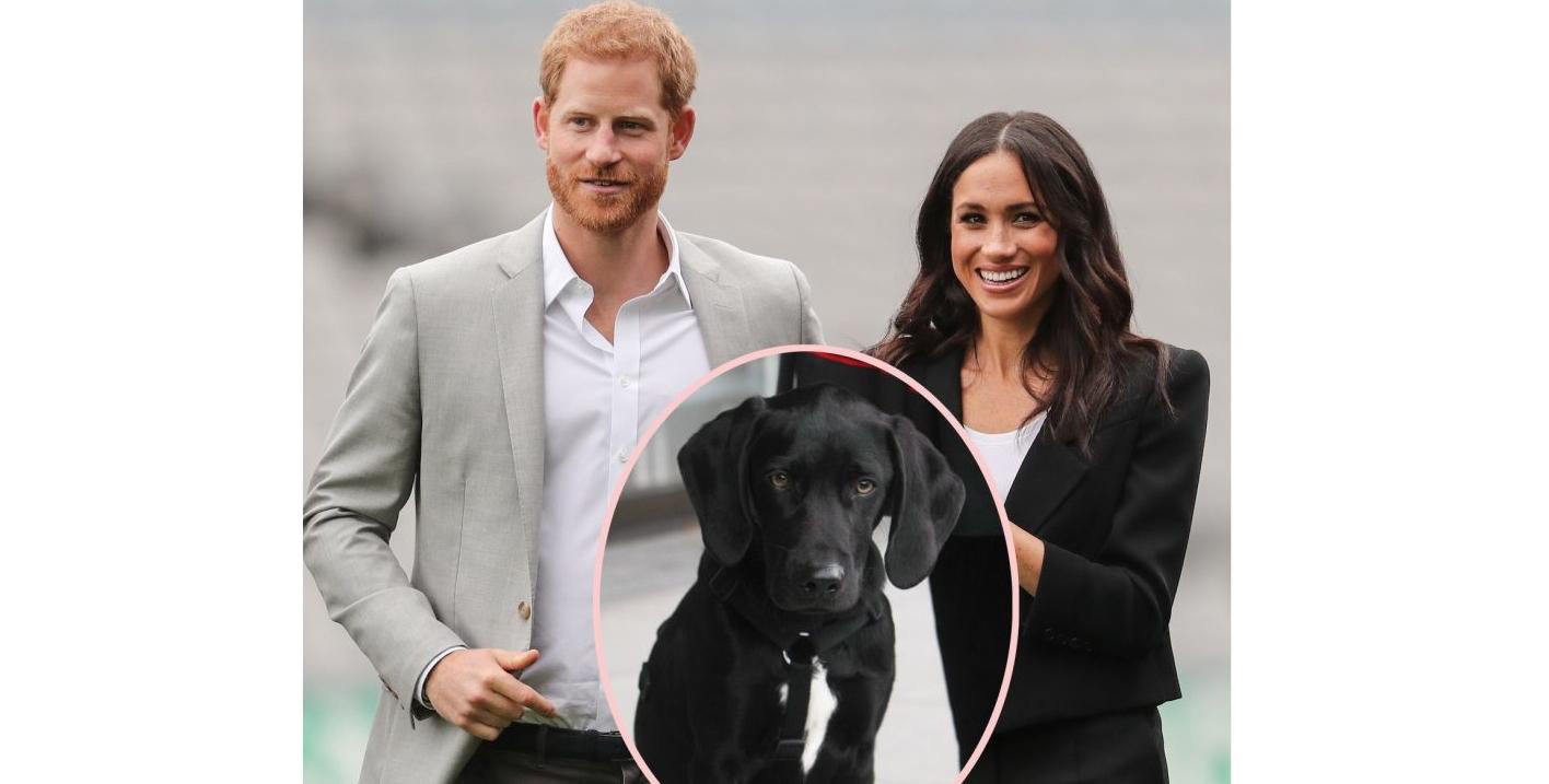 I-a murit câinele lu' prințu' Harry (nu dăm nume)!!!