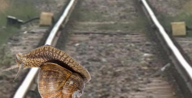 Viteza mai face o victimă: un melc a deraiat de pe calea ferată!