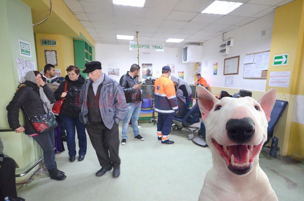 Tot mai mulți români ajung la spital mușcați de miel!