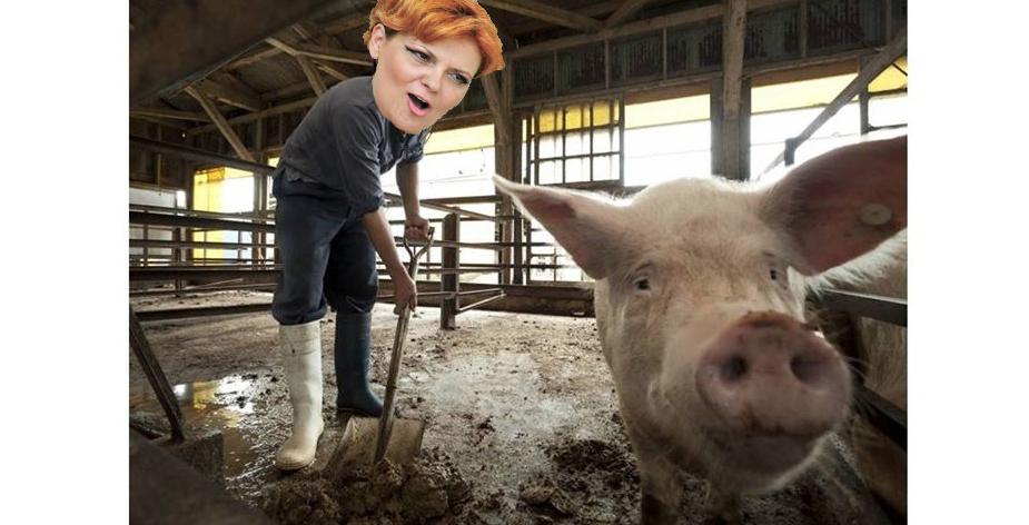 Olguța, angajată de Dragnea la ferma de porcica să nu își iasă din mânăpână ajunge din nou ministră