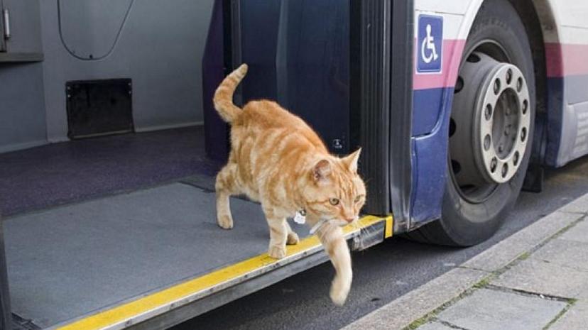 Pisica amendată că circula cu autobuzul susține că i-a mâncat câinele biletul!