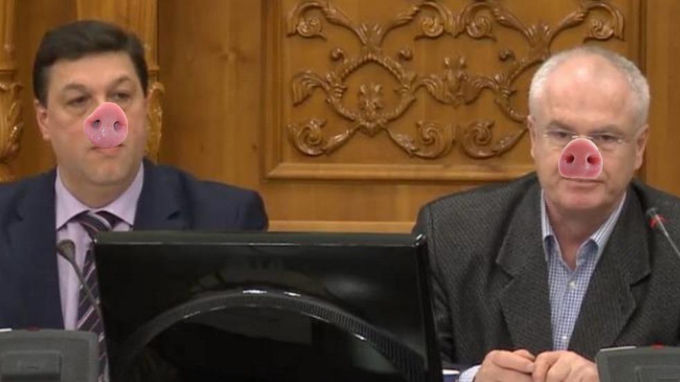 Alertă! În Parlamentul României au fost găsiți porci radioactivi!