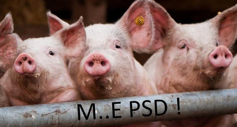 """Revolte în mai multe ferme de porci împotriva lui Șerban Nicolae: """"Ne face specia de râs!"""""""