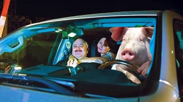 Ca să scape de Ignat, un porc s-a angajat șofer la un penal din PSD!