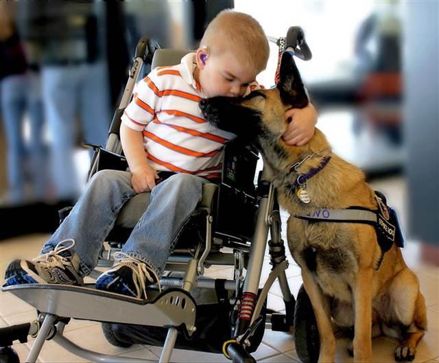 Copiii și câinii vagabonzi sunt tot ai noștri