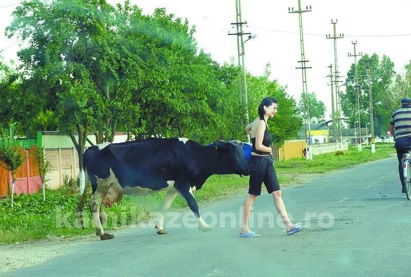 Paparazzi: EBA cu vaca