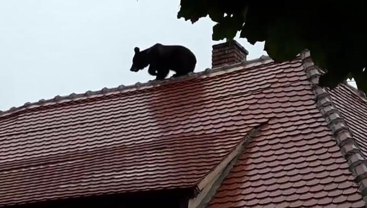 Ursulețul a fost incinerat în pripă, spre a sa ascunde dimensiunile, vârsta, și spre a nu se putea re-prelua probe biologice