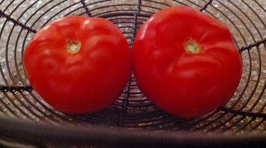 Vine sfârșitul lumii: am luat roșii de la supermarket și s-au stricat după doar 2 luni de stat în frigider!