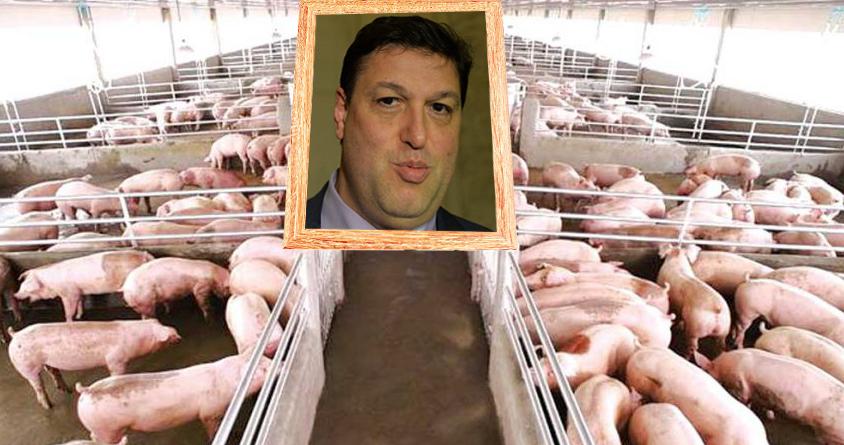 Fermele care au pus poza lui Șerban Nicolae la intrare au fost ocolite de gripa porcină!