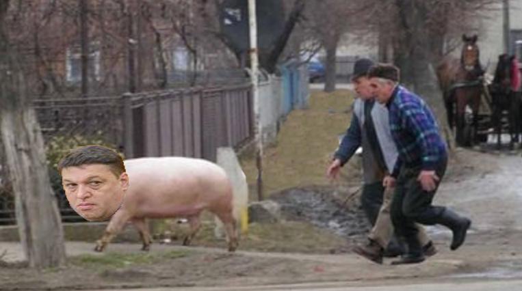 Șerban Nicolae, alergat pe stradă de câțiva fermieri care au confundat pesta porcină cu ciuma roșie!