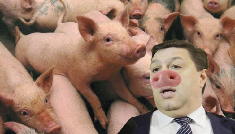 Zeci de mii de porci s-au înscris în PSD ca să scape de pesta porcină, ca Șerban Nicolae!