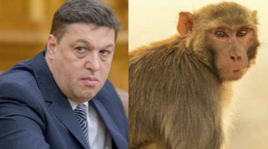 Involuție: O maimuță de la zoo a început să se creadă Șerban Nicolae!