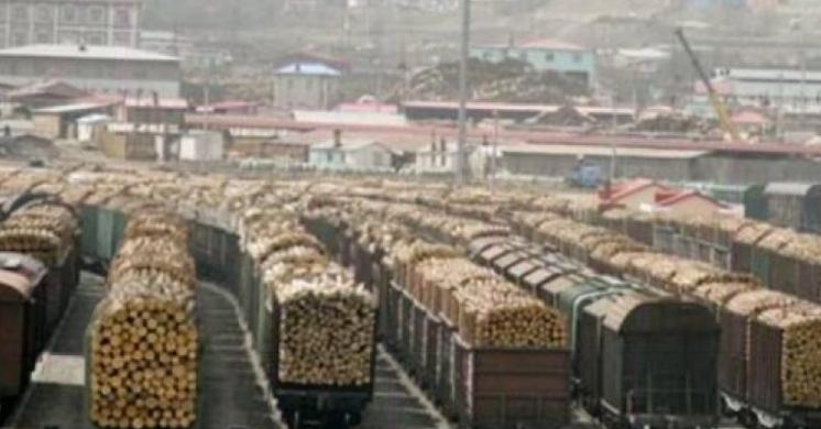UE va interzice României să exporte carne de porc, din cauza pestei porcine. Bine că nu există pestă lemnoasă, că nu mai puteam să exportăm nici pădurile!