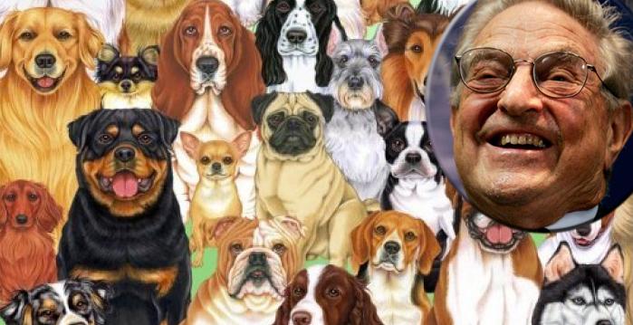Sute de câini îl acuză de Soros că le datorează bani de aproape 2 ani!