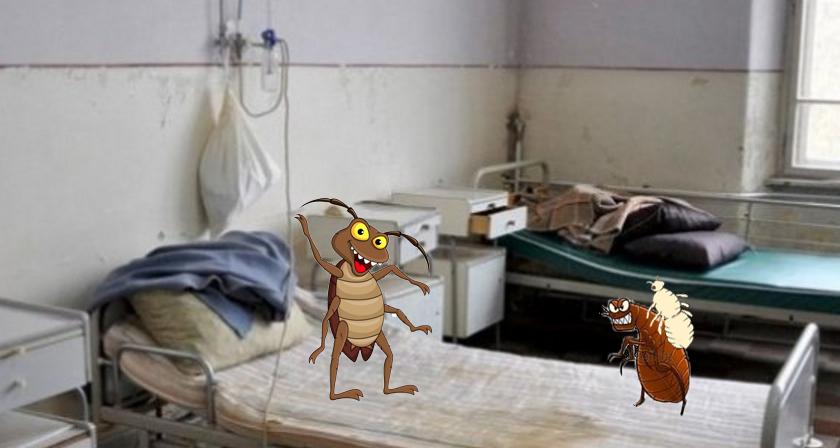 Scandal monstru într-un spital din Ialomița: puricii au luat paduchi de la gândaci!