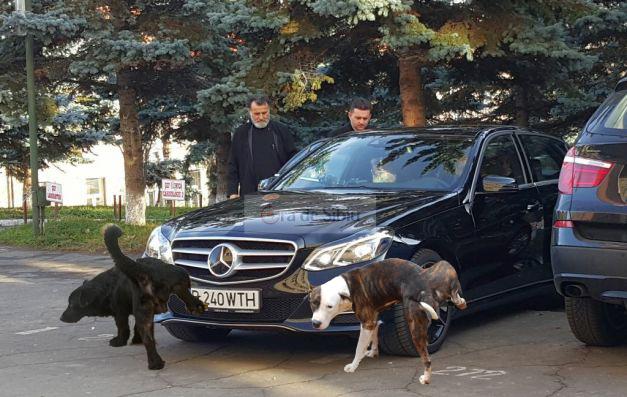 Mitropolitul Ardealului a blestemat doi câini care s-au pișat pe Merțanul lui de 70.000 de euro