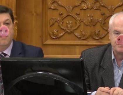 O nouărasăde porci descoperităîn Parlamentul României: porciipenali!