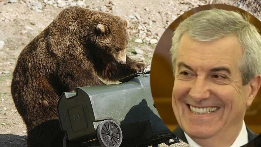 Brașov: Un urs era să-l mănânce pe Tăriceanu crezând că e gunoi!
