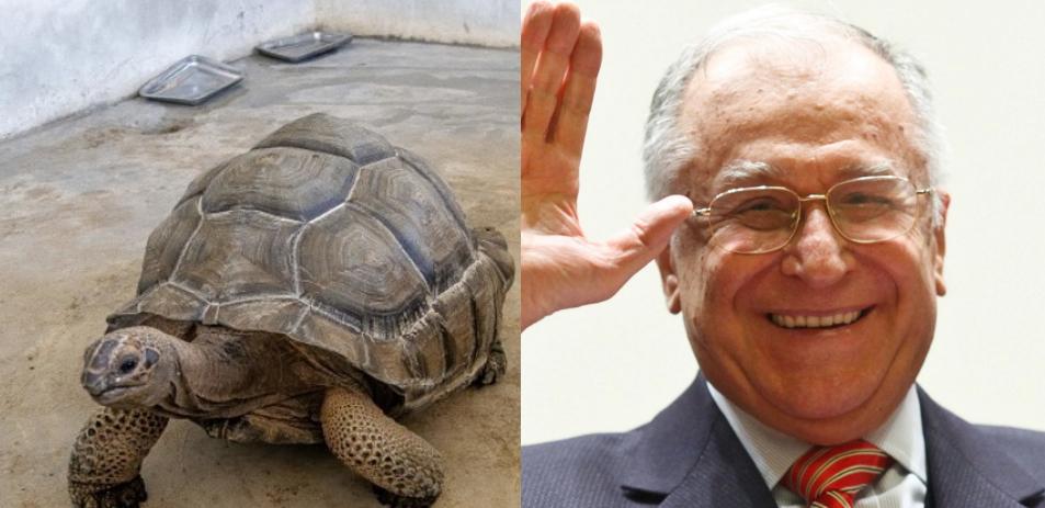 O țestoasă născută odată cu Dimitrie Cantemir a murit la vârsta de 344 de ani. Iliescu n-are nici 90!