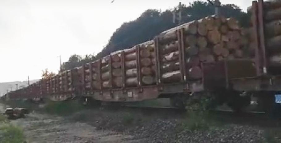 40 de vagoane cu păduredefrişată plecând din țară. Dacă le faceți cu mâna, peste 2-3 luni vă vor aduce pădurea înapoi. Sub formă de mobilă!