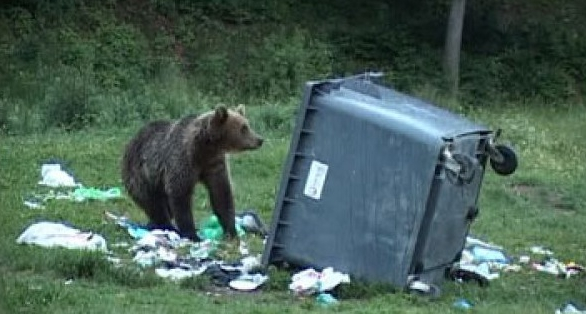 Sătui să vadă atâta sărăcie în jur, urşii din Braşov au plecat să caute în gunaiele din Spania!